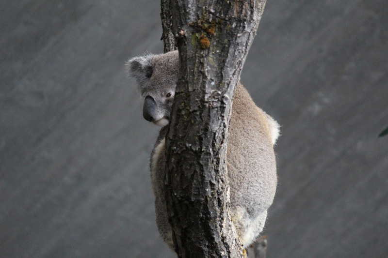 Zoo, Zuerich