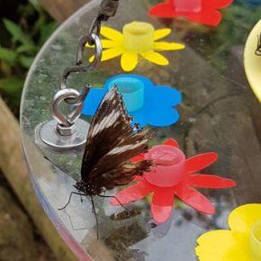 Papiliorama Flora, Fauna & Fun (EN)