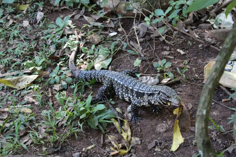 Iguazu-Nationalpark Argentinien