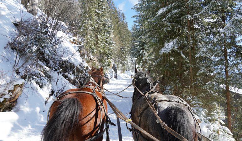 Rigi Winterwunderland