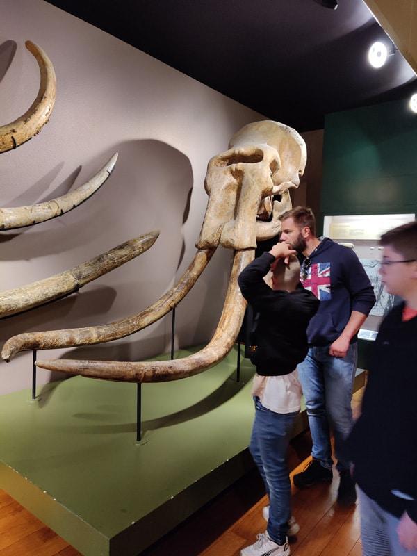 Naturhistorisches-Museum Basel