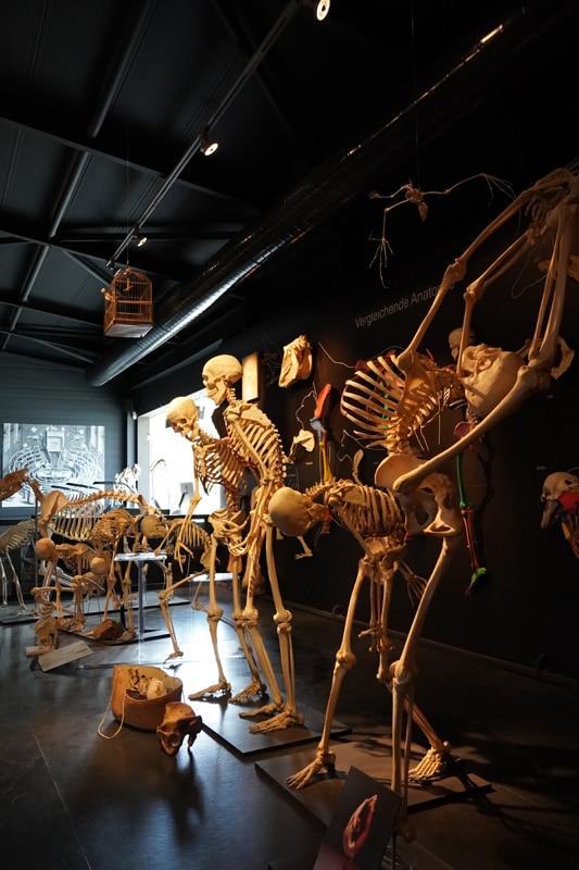 Kulturama Museum des Menschen